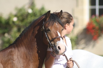 championnat de France d'élevage Welsh